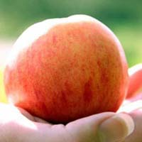 Apple_Hand Blog